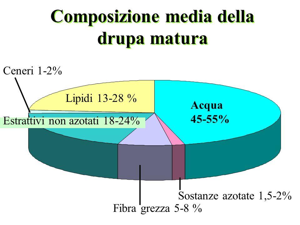 Composizione media della drupa matura Acqua 45-55% Lipidi 13-28 % Estrattivi non azotati 18-24% Ceneri 1-2% Fibra grezza 5-8 % Sostanze azotate 1,5-2%
