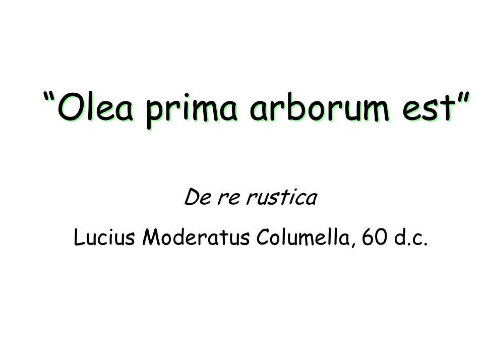 Olea prima arborum est Lucius Moderatus Columella, 60 d.c. De re rustica