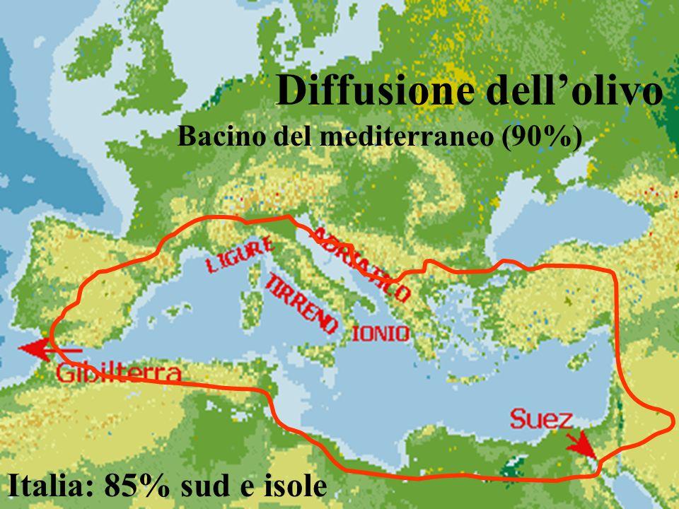 Diffusione dellolivo Bacino del mediterraneo (90%) Italia: 85% sud e isole