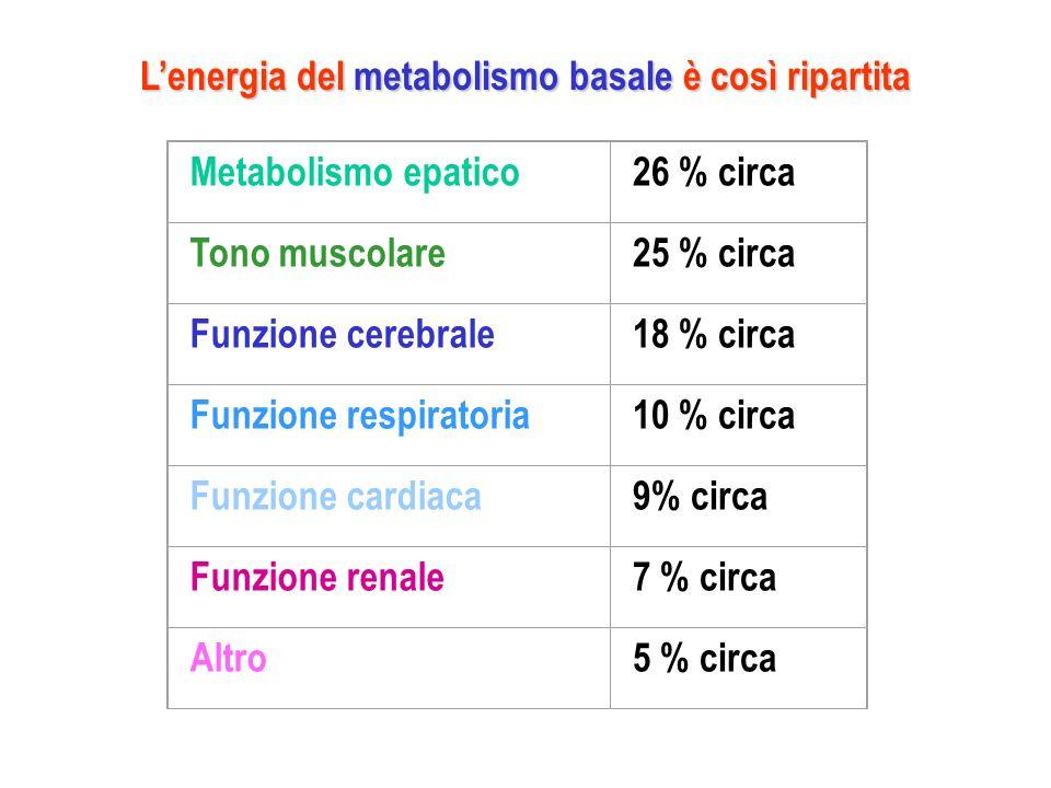 Metabolismo epatico26 % circa Tono muscolare25 % circa Funzione cerebrale18 % circa Funzione respiratoria10 % circa Funzione cardiaca9% circa Funzione