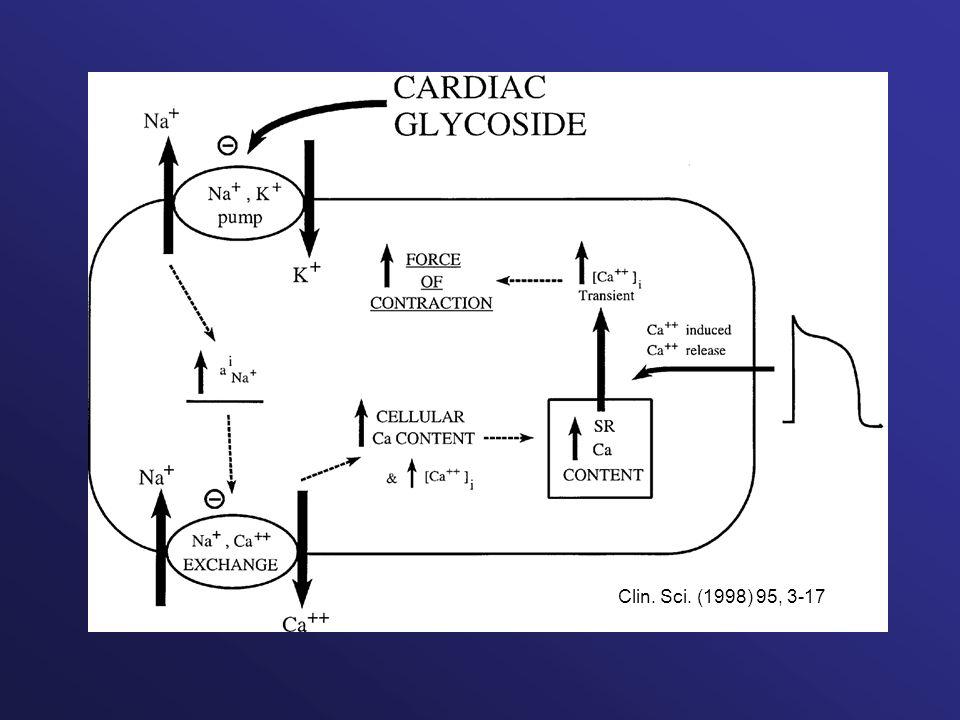 Clin. Sci. (1998) 95, 3-17
