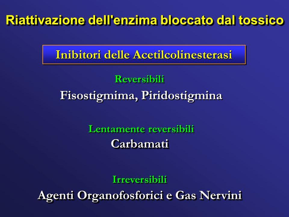 Inibitori delle Acetilcolinesterasi Agenti Organofosforici e Gas Nervini CarbamatiCarbamati Fisostigmima, Piridostigmina Reversibili Irreversibili Len