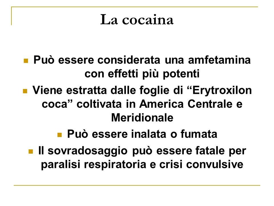 La cocaina Può essere considerata una amfetamina con effetti più potenti Viene estratta dalle foglie di Erytroxilon coca coltivata in America Centrale e Meridionale Può essere inalata o fumata Il sovradosaggio può essere fatale per paralisi respiratoria e crisi convulsive