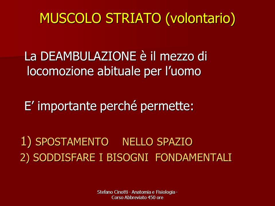 Stefano Cinotti - Anatomia e Fisiologia - Corso Abbreviato 450 ore MUSCOLO STRIATO (volontario) La DEAMBULAZIONE è il mezzo di locomozione abituale pe