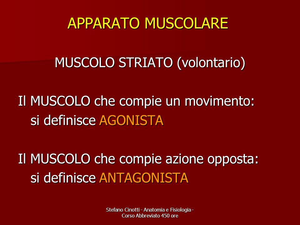 Stefano Cinotti - Anatomia e Fisiologia - Corso Abbreviato 450 ore APPARATO MUSCOLARE MUSCOLO STRIATO (volontario) Il MUSCOLO che compie un movimento: