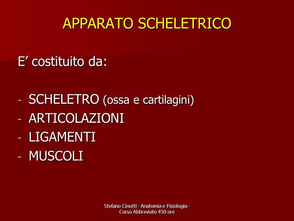 Stefano Cinotti - Anatomia e Fisiologia - Corso Abbreviato 450 ore APPARATO SCHELETRICO E costituito da: - SCHELETRO (ossa e cartilagini) - ARTICOLAZI