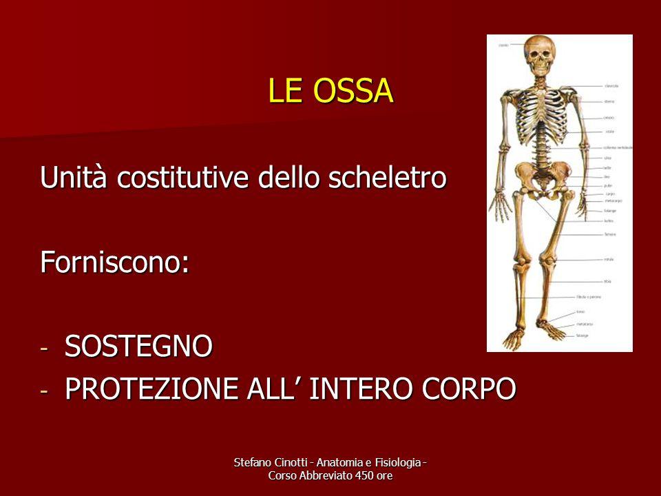 Stefano Cinotti - Anatomia e Fisiologia - Corso Abbreviato 450 ore LE OSSA Unità costitutive dello scheletro Forniscono: - SOSTEGNO - PROTEZIONE ALL I