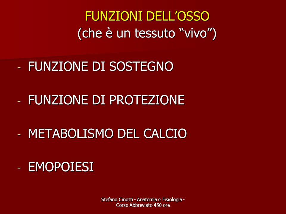 Stefano Cinotti - Anatomia e Fisiologia - Corso Abbreviato 450 ore FUNZIONI DELLOSSO FUNZIONI DELLOSSO (che è un tessuto vivo) (che è un tessuto vivo)