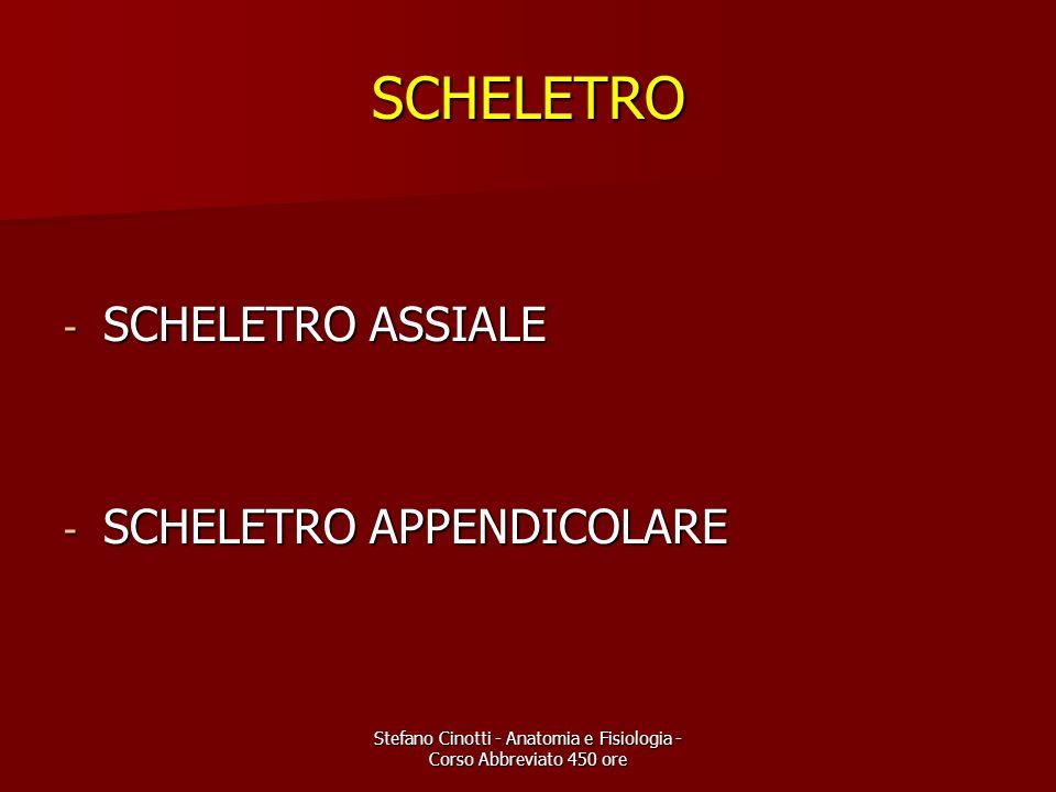 Stefano Cinotti - Anatomia e Fisiologia - Corso Abbreviato 450 ore SCHELETRO - SCHELETRO ASSIALE - SCHELETRO APPENDICOLARE