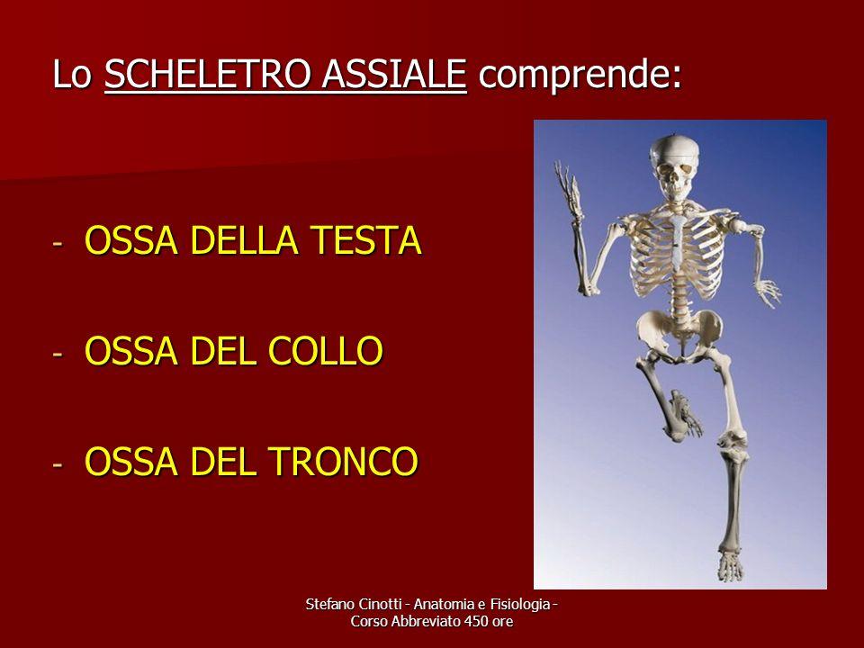 Stefano Cinotti - Anatomia e Fisiologia - Corso Abbreviato 450 ore Lo SCHELETRO ASSIALE comprende: - OSSA DELLA TESTA - OSSA DEL COLLO - OSSA DEL TRON