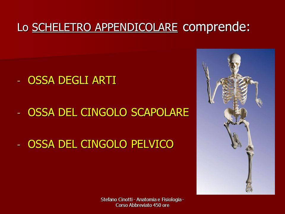 Stefano Cinotti - Anatomia e Fisiologia - Corso Abbreviato 450 ore Lo SCHELETRO APPENDICOLARE comprende: - OSSA DEGLI ARTI - OSSA DEL CINGOLO SCAPOLAR