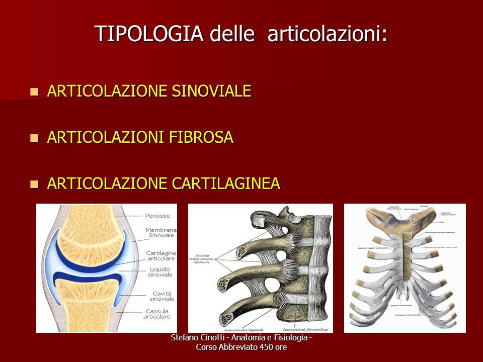 Stefano Cinotti - Anatomia e Fisiologia - Corso Abbreviato 450 ore TIPOLOGIA delle articolazioni: ARTICOLAZIONE SINOVIALE ARTICOLAZIONE SINOVIALE ARTI