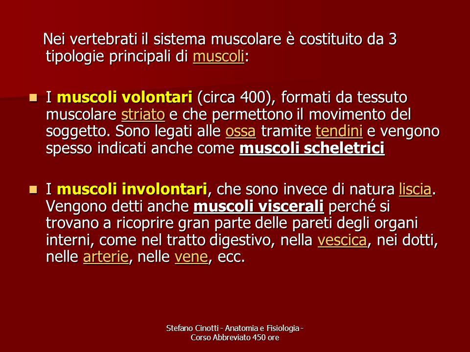 Stefano Cinotti - Anatomia e Fisiologia - Corso Abbreviato 450 ore Nei vertebrati il sistema muscolare è costituito da 3 tipologie principali di musco