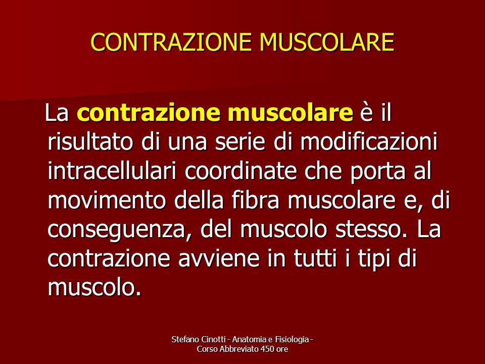 Stefano Cinotti - Anatomia e Fisiologia - Corso Abbreviato 450 ore CONTRAZIONE MUSCOLARE La contrazione muscolare è il risultato di una serie di modif