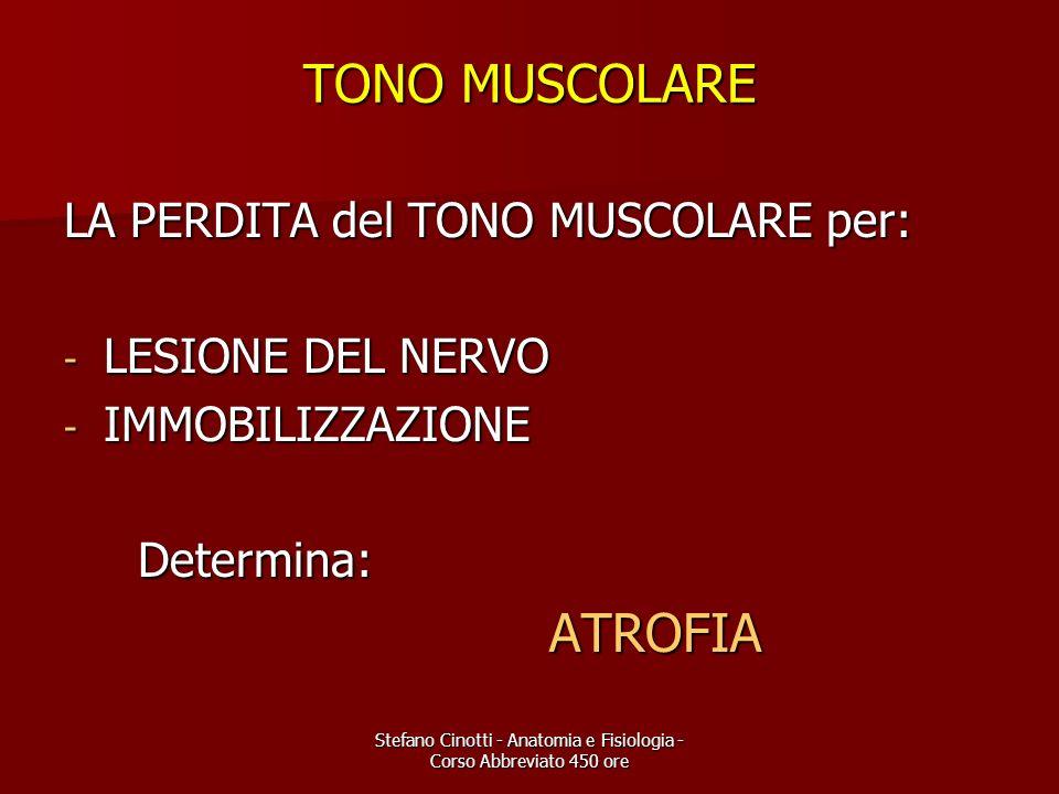 Stefano Cinotti - Anatomia e Fisiologia - Corso Abbreviato 450 ore TONO MUSCOLARE LA PERDITA del TONO MUSCOLARE per: - LESIONE DEL NERVO - IMMOBILIZZA