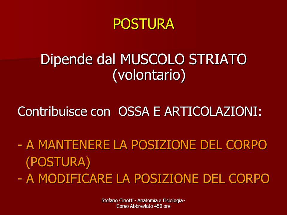 Stefano Cinotti - Anatomia e Fisiologia - Corso Abbreviato 450 ore POSTURA Dipende dal MUSCOLO STRIATO (volontario) Contribuisce con OSSA E ARTICOLAZI