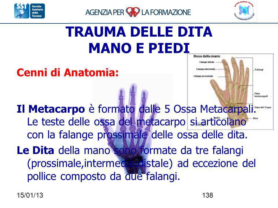 15/01/13138 Cenni di Anatomia: Il Metacarpo è formato dalle 5 Ossa Metacarpali. Le teste delle ossa del metacarpo si articolano con la falange prossim
