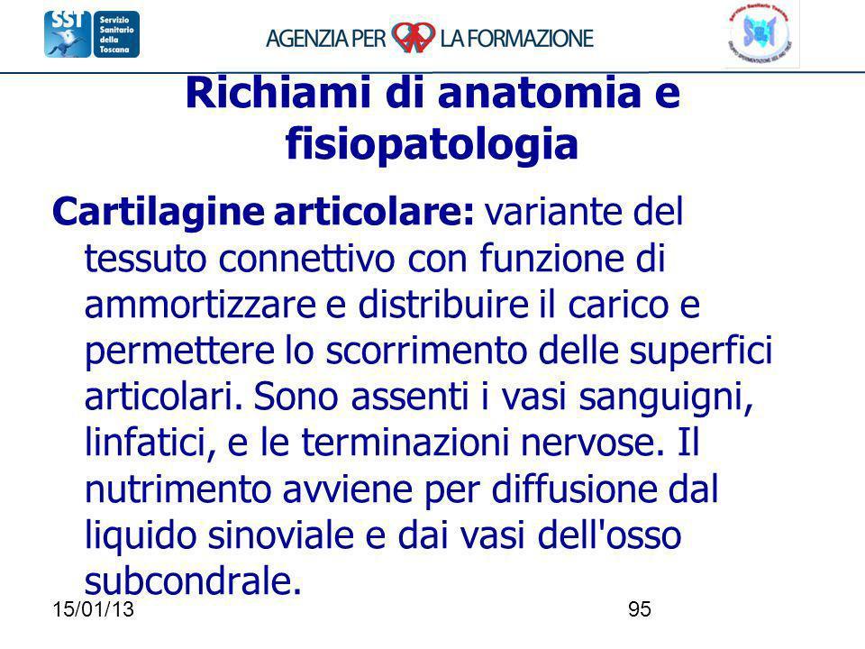 15/01/1395 Richiami di anatomia e fisiopatologia Cartilagine articolare: variante del tessuto connettivo con funzione di ammortizzare e distribuire il