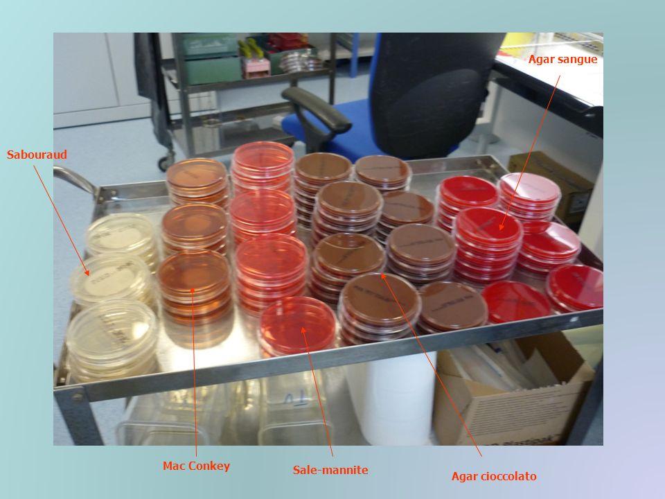TERRENI SOLIDI PIU COMUNEMENTE IMPIEGATI Agar-Sangue: è un terreno ricco che permette la crescita praticamente di tutti i batteri Agar-Cioccolato: consente lo sviluppo anche dei batteri più esigenti dal punto di vista nutrizionale Agar-MacConkey: seleziona la crescita dei batteri Gram- ed è contemporaneamente un terreno di identificazione Agar-SaleMannite: contiene una concentrazione salina che inibisce la crescita della maggior parte dei microrganismi tranne lo Stafilococco ed un indicatore per rivelare lutilizzazione del mannitolo Agar-Sabouraud: consente la crescita selettiva di lieviti e miceti Agar-SS: viene impiegato per la ricerca di Salmonella e Shigella e contiene sali biliari che inibiscono i batteri G+ ed un indicatore che rivela la fermentazione o meno del lattosio