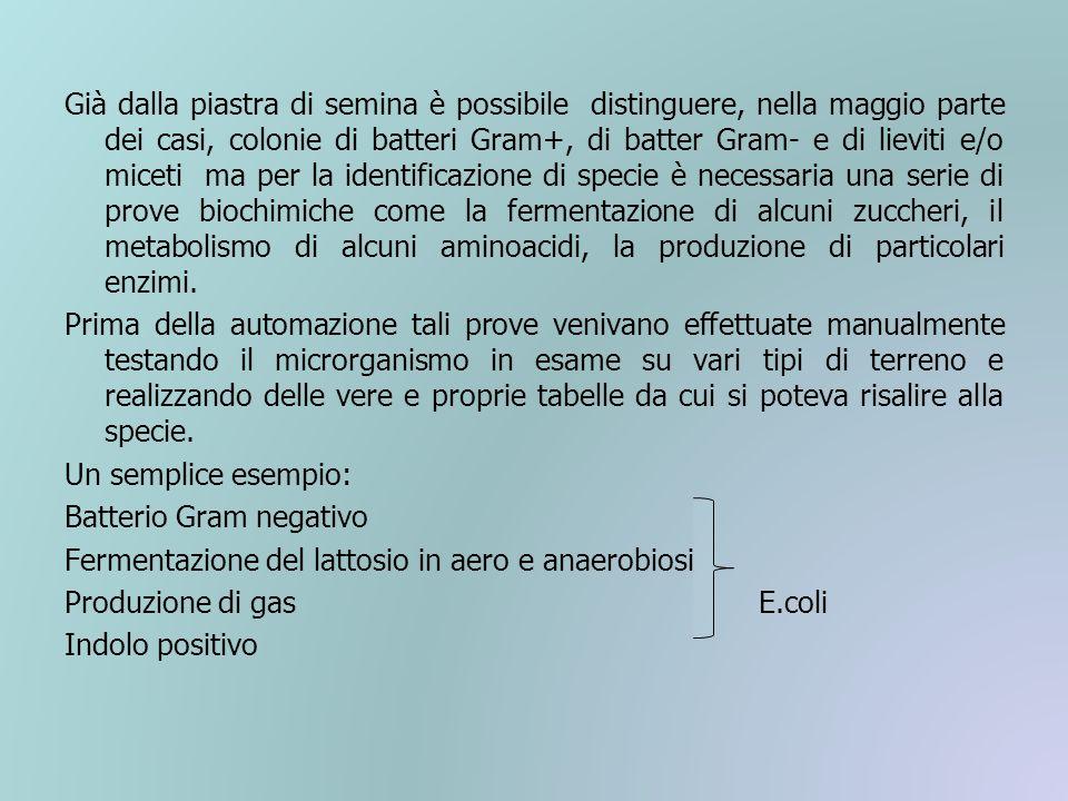 Già dalla piastra di semina è possibile distinguere, nella maggio parte dei casi, colonie di batteri Gram+, di batter Gram- e di lieviti e/o miceti ma