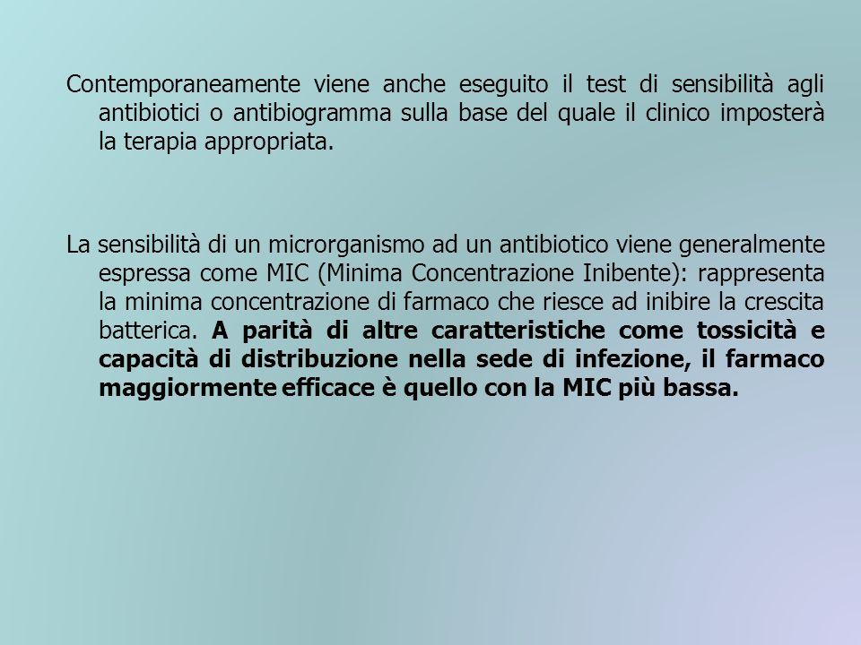 Contemporaneamente viene anche eseguito il test di sensibilità agli antibiotici o antibiogramma sulla base del quale il clinico imposterà la terapia a