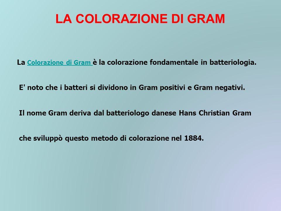 LA COLORAZIONE DI GRAM La Colorazione di Gram è la colorazione fondamentale in batteriologia. Colorazione di Gram E' noto che i batteri si dividono in