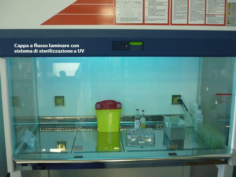 Tutto il materiale che perviene alla microbiologia viene processato sotto cappa aspirante a flusso laminare. Il flusso laminare ha una doppia funzione