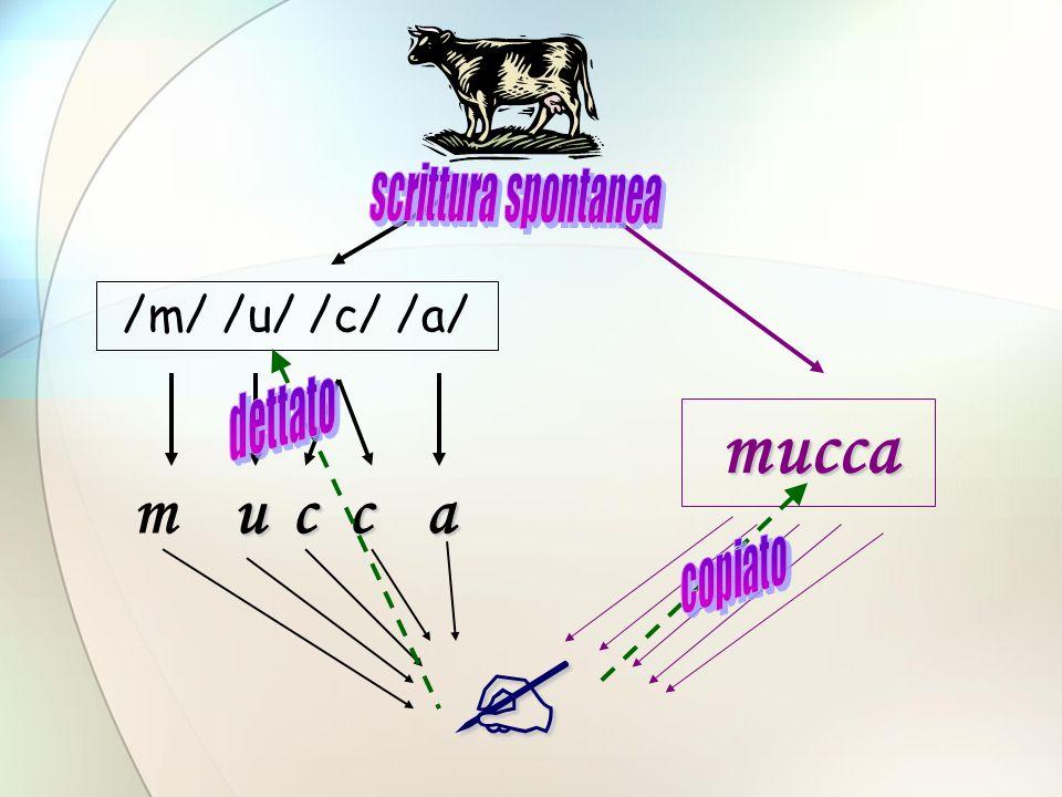 Correttezza della scrittura Difficoltà nel recupero rapido dei grafemi o nellassociazione fonema-grafema Analisi e sintesi fonemica scarsamente automatizzate Difficoltà nel ricontrollo durante il processo di scrittura Difficoltà nel controllo delle regole di codifica ortografica più complesse Difficoltà di rilettura ed autocorrezione