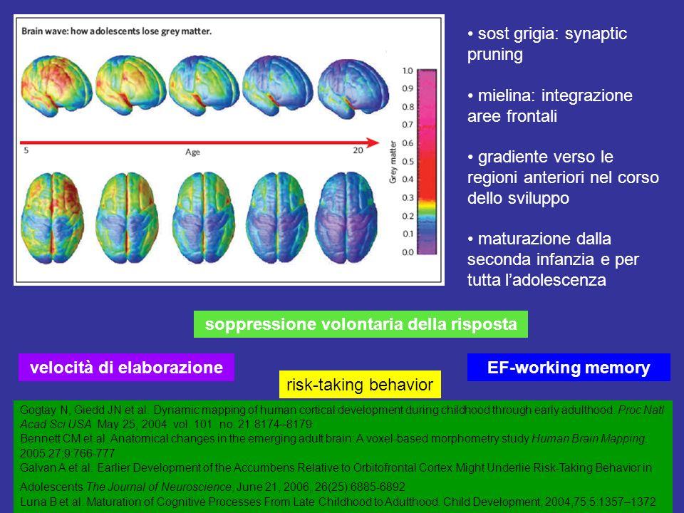 sost grigia: synaptic pruning mielina: integrazione aree frontali gradiente verso le regioni anteriori nel corso dello sviluppo maturazione dalla seconda infanzia e per tutta ladolescenza Gogtay N, Giedd JN et al.