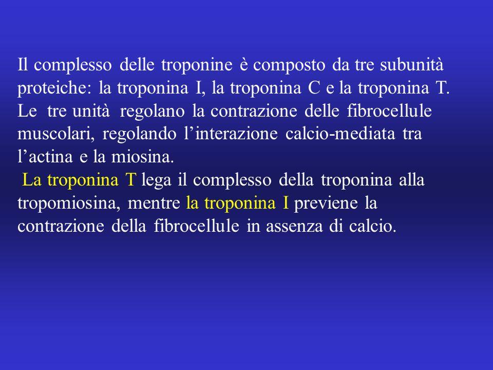Il complesso delle troponine è composto da tre subunità proteiche: la troponina I, la troponina C e la troponina T. Le tre unità regolano la contrazio