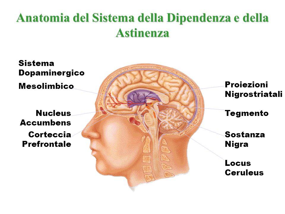 La nicotina è una sostanza neurotropa che agisce sul SN centrale e periferico TOSSICODIPENDENZA DA NICOTINA N N CH3 NAchRS Ca