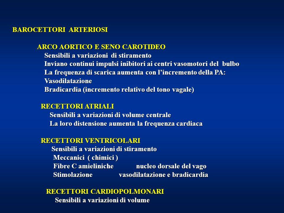 BAROCETTORI ARTERIOSI ARCO AORTICO E SENO CAROTIDEO ARCO AORTICO E SENO CAROTIDEO Sensibili a variazioni di stiramento Sensibili a variazioni di stiramento Inviano continui impulsi inibitori ai centri vasomotori del bulbo Inviano continui impulsi inibitori ai centri vasomotori del bulbo La frequenza di scarica aumenta con lincremento della PA: La frequenza di scarica aumenta con lincremento della PA: Vasodilatazione Vasodilatazione Bradicardia (incremento relativo del tono vagale) Bradicardia (incremento relativo del tono vagale) RECETTORI ATRIALI RECETTORI ATRIALI Sensibili a variazioni di volume centrale Sensibili a variazioni di volume centrale La loro distensione aumenta la frequenza cardiaca La loro distensione aumenta la frequenza cardiaca RECETTORI VENTRICOLARI RECETTORI VENTRICOLARI Sensibili a variazioni di stiramento Sensibili a variazioni di stiramento Meccanici ( chimici ) Meccanici ( chimici ) Fibre C amieliniche nucleo dorsale del vago Fibre C amieliniche nucleo dorsale del vago Stimolazione vasodilatazione e bradicardia Stimolazione vasodilatazione e bradicardia RECETTORI CARDIOPOLMONARI RECETTORI CARDIOPOLMONARI Sensibili a variazioni di volume Sensibili a variazioni di volume