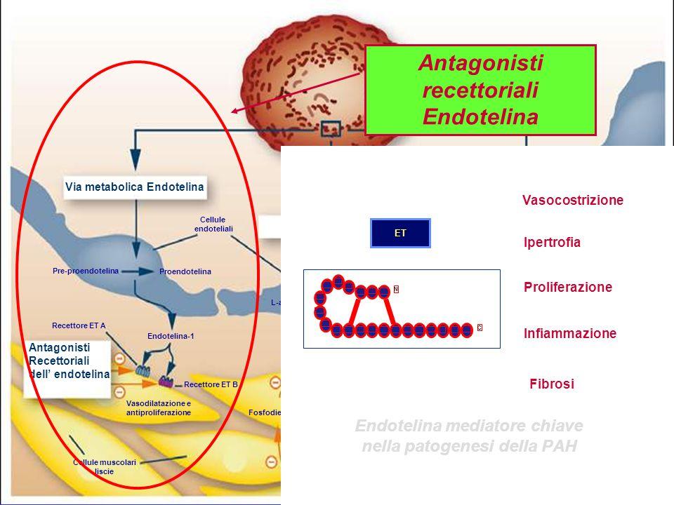 Via metabolica Endotelina Via metabolica NO Via metabolica Prostaciclina Lume del vaso Cellule endoteliali Pre-proendotelina Proendotelina Endotelina-