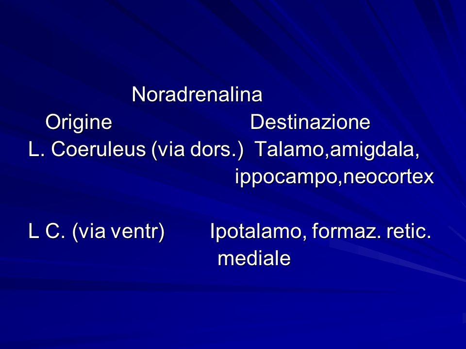 Noradrenalina Noradrenalina Origine Destinazione Origine Destinazione L. Coeruleus (via dors.) Talamo,amigdala, ippocampo,neocortex ippocampo,neocorte