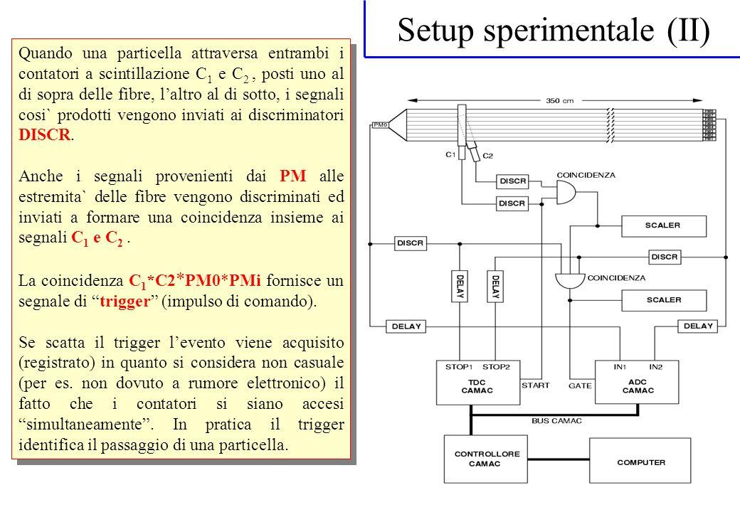 Setup sperimentale (II) Quando una particella attraversa entrambi i contatori a scintillazione C 1 e C 2, posti uno al di sopra delle fibre, laltro al