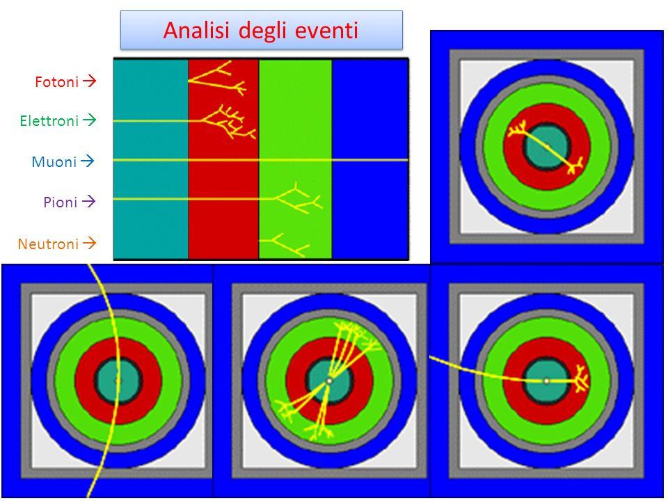 Fotoni Elettroni Muoni Pioni Neutroni Analisi degli eventi