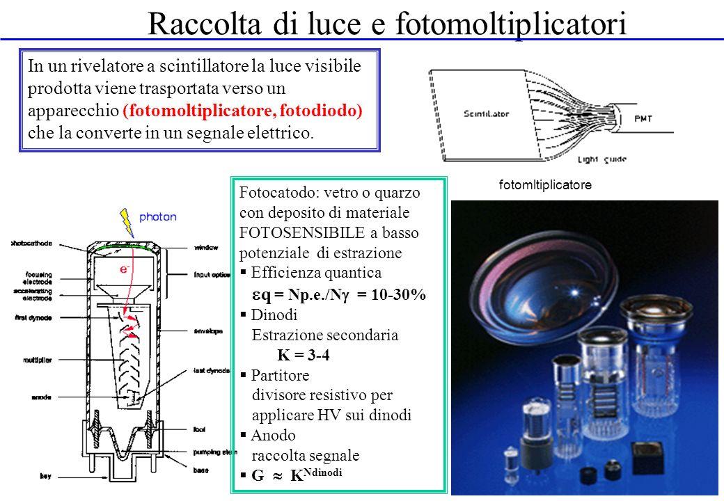 Raccolta di luce e fotomoltiplicatori In un rivelatore a scintillatore la luce visibile prodotta viene trasportata verso un apparecchio (fotomoltiplic