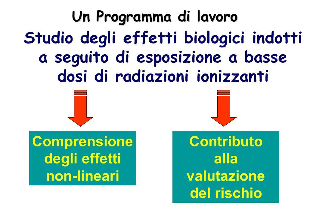 Studio degli effetti biologici indotti a seguito di esposizione a basse dosi di radiazioni ionizzanti Un Programma di lavoro Contributo alla valutazio