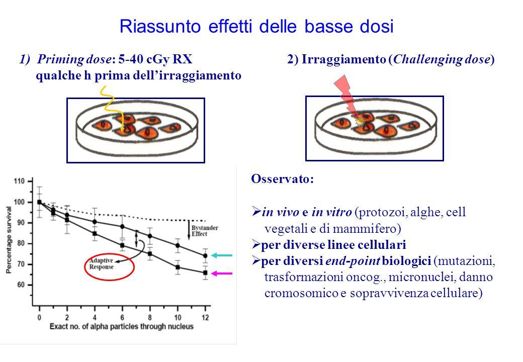 Riassunto effetti delle basse dosi 1)Priming dose: 5-40 cGy RX qualche h prima dellirraggiamento 2) Irraggiamento (Challenging dose) Osservato: in vivo e in vitro (protozoi, alghe, cell vegetali e di mammifero) per diverse linee cellulari per diversi end-point biologici (mutazioni, trasformazioni oncog., micronuclei, danno cromosomico e sopravvivenza cellulare)