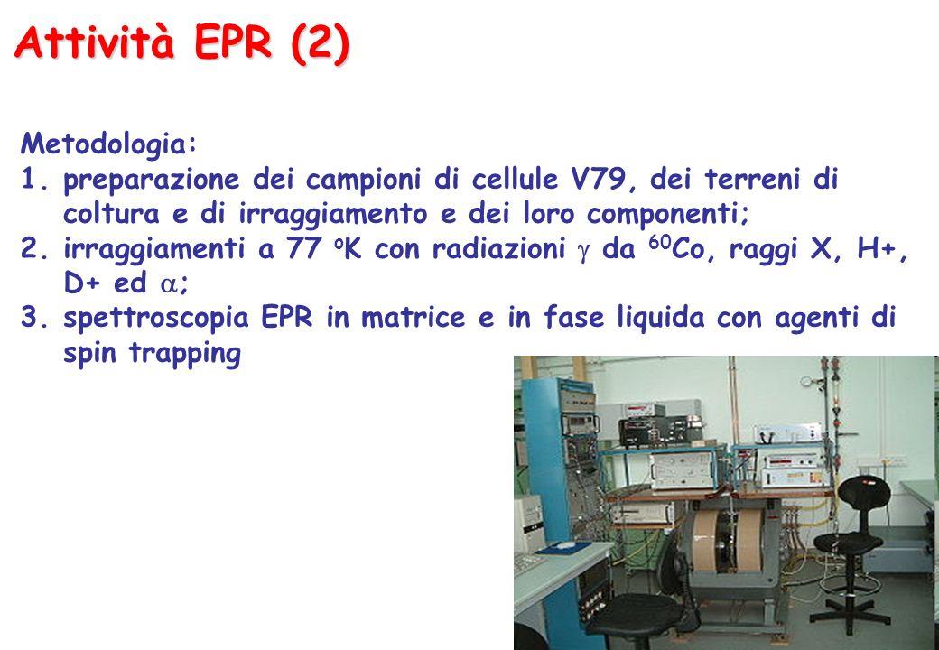 Attività EPR (2) Metodologia: 1.preparazione dei campioni di cellule V79, dei terreni di coltura e di irraggiamento e dei loro componenti; 2.irraggiamenti a 77 o K con radiazioni da 60 Co, raggi X, H+, D+ ed ; 3.spettroscopia EPR in matrice e in fase liquida con agenti di spin trapping