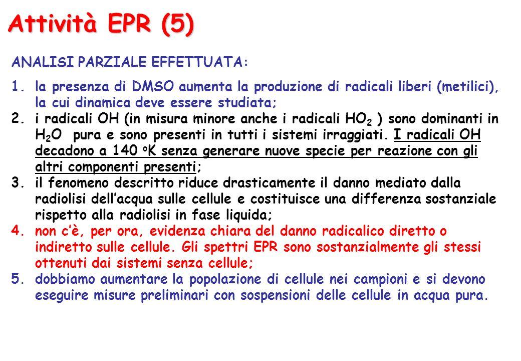 Attività EPR (5) ANALISI PARZIALE EFFETTUATA: 1.la presenza di DMSO aumenta la produzione di radicali liberi (metilici), la cui dinamica deve essere studiata; 2.i radicali OH (in misura minore anche i radicali HO 2 ) sono dominanti in H 2 O pura e sono presenti in tutti i sistemi irraggiati.