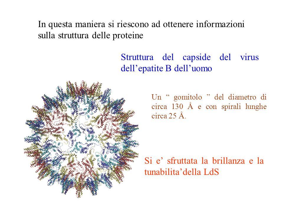 In questa maniera si riescono ad ottenere informazioni sulla struttura delle proteine Struttura del capside del virus dellepatite B delluomo Si e sfru