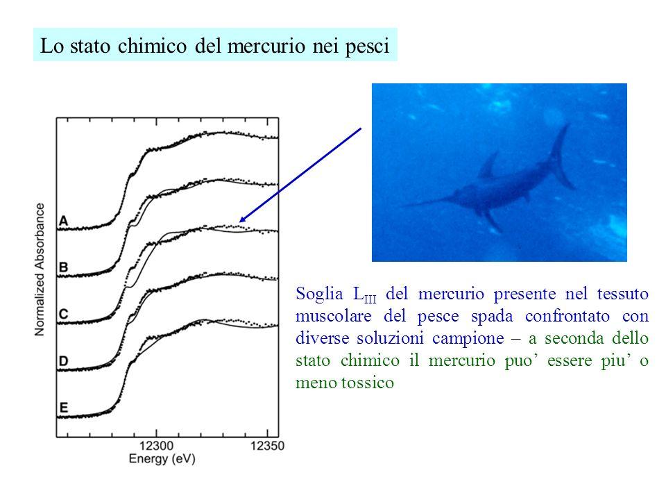 Lo stato chimico del mercurio nei pesci Soglia L III del mercurio presente nel tessuto muscolare del pesce spada confrontato con diverse soluzioni cam
