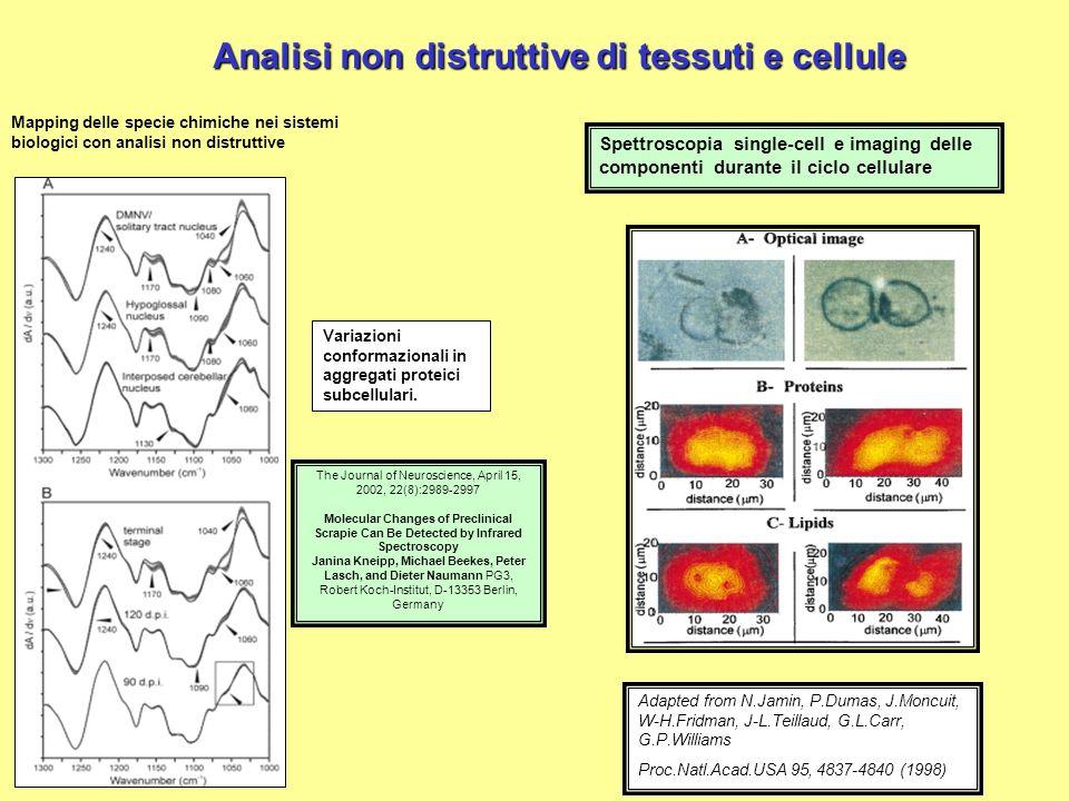 Analisi non distruttive di tessuti e cellule Mapping delle specie chimiche nei sistemi biologici con analisi non distruttive Variazioni conformazional