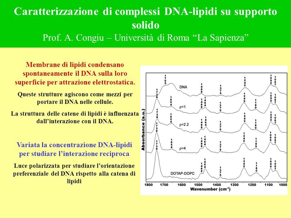 Caratterizzazione di complessi DNA-lipidi su supporto solido Prof. A. Congiu – Università di Roma La Sapienza Membrane di lipidi condensano spontaneam