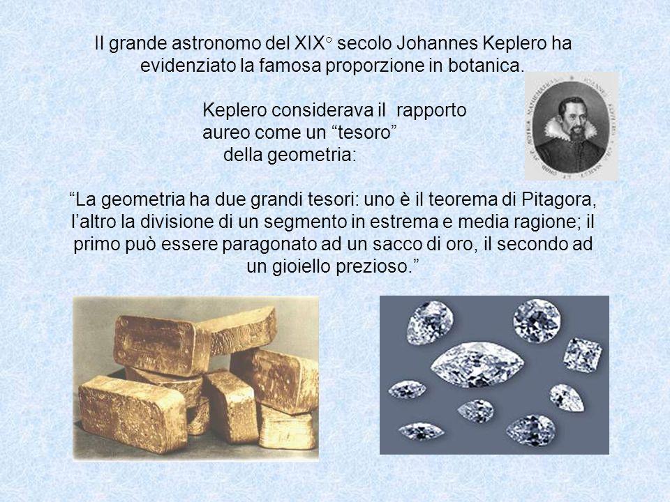 Il grande astronomo del XIX° secolo Johannes Keplero ha evidenziato la famosa proporzione in botanica. Keplero considerava il rapporto aureo come un t