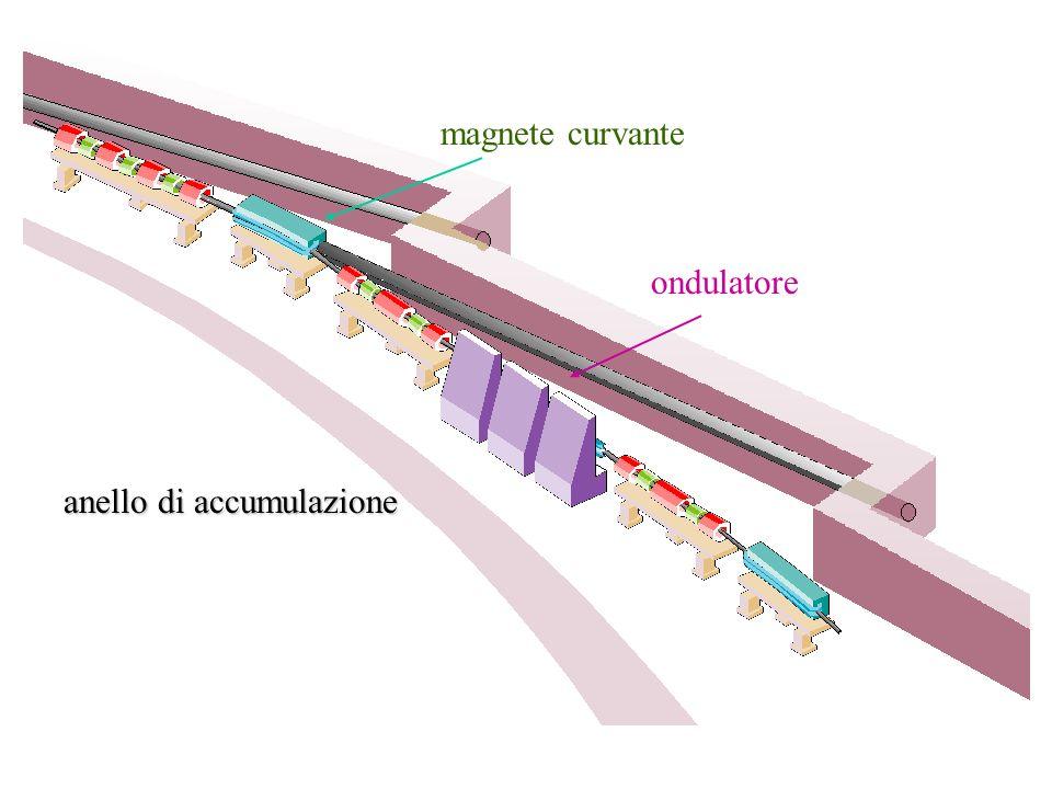 magnete curvante ondulatore anello di accumulazione