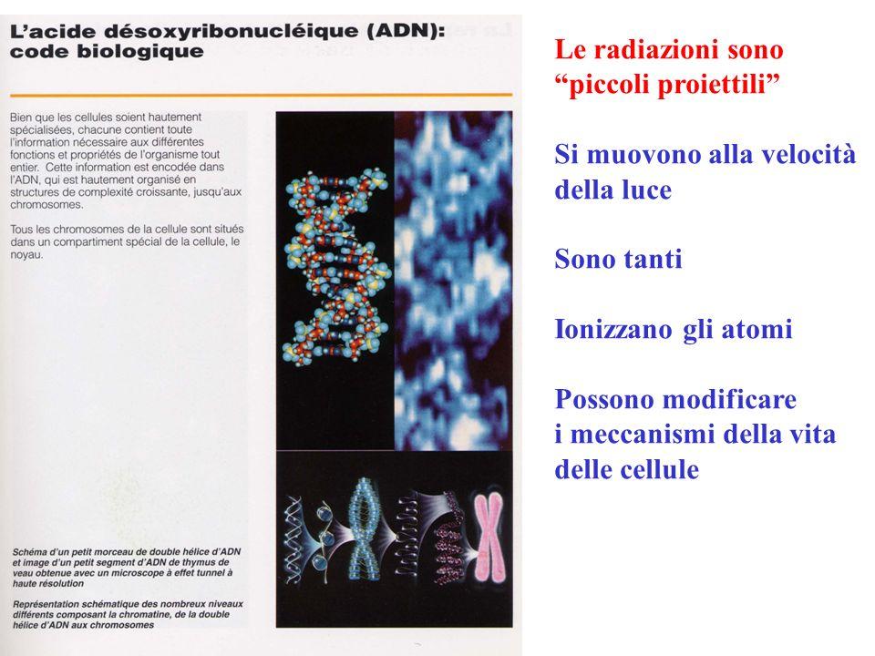 Gli effetti delle radiazioni dipendono dalla dose e da dove sono assorbite Effetti immediati, a breve scadenza ed a lunga scadenza