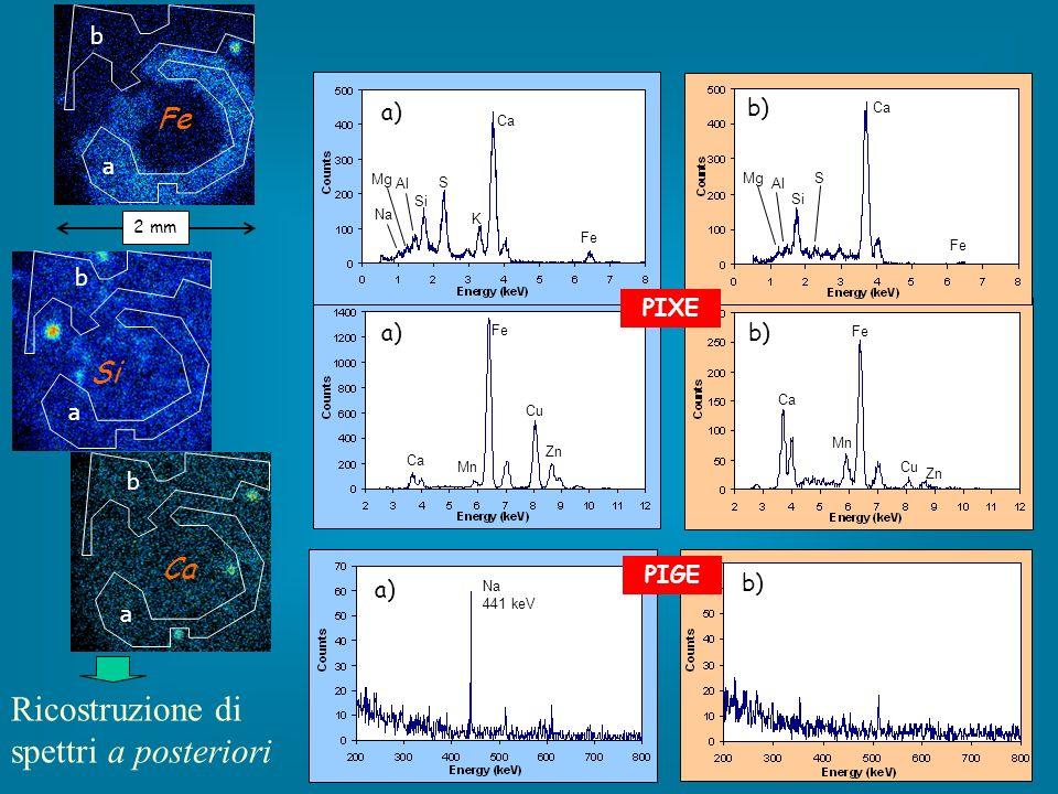 b a Fe a b Si a b Ca Fe Mn Zn Cu S K Ca Fe Al Si Na Mg Ca Fe Mn Zn Cu S Ca Fe Al Si Mg a) PIXE b) Na 441 keV PIGE a) b) Ricostruzione di spettri a posteriori 2 mm