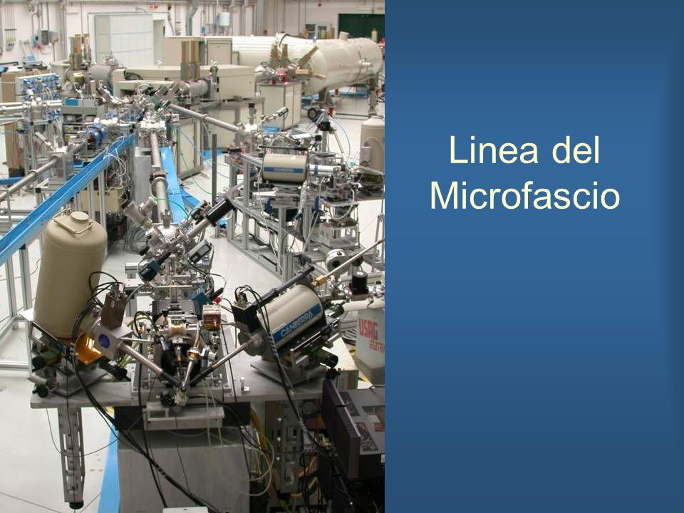 Linea del Microfascio